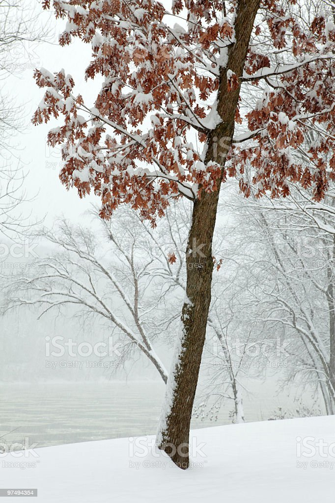 Autumn Leaves in Winter Snow Storm royalty-free stock photo