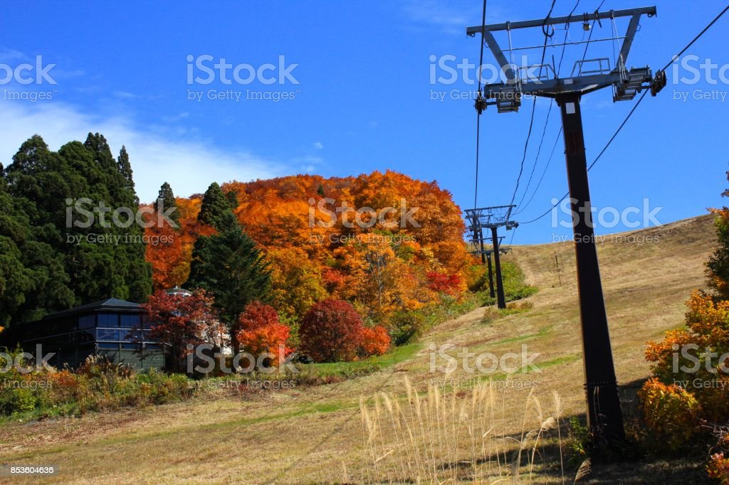 Autumn Leaves in Yamagata Japan stock photo