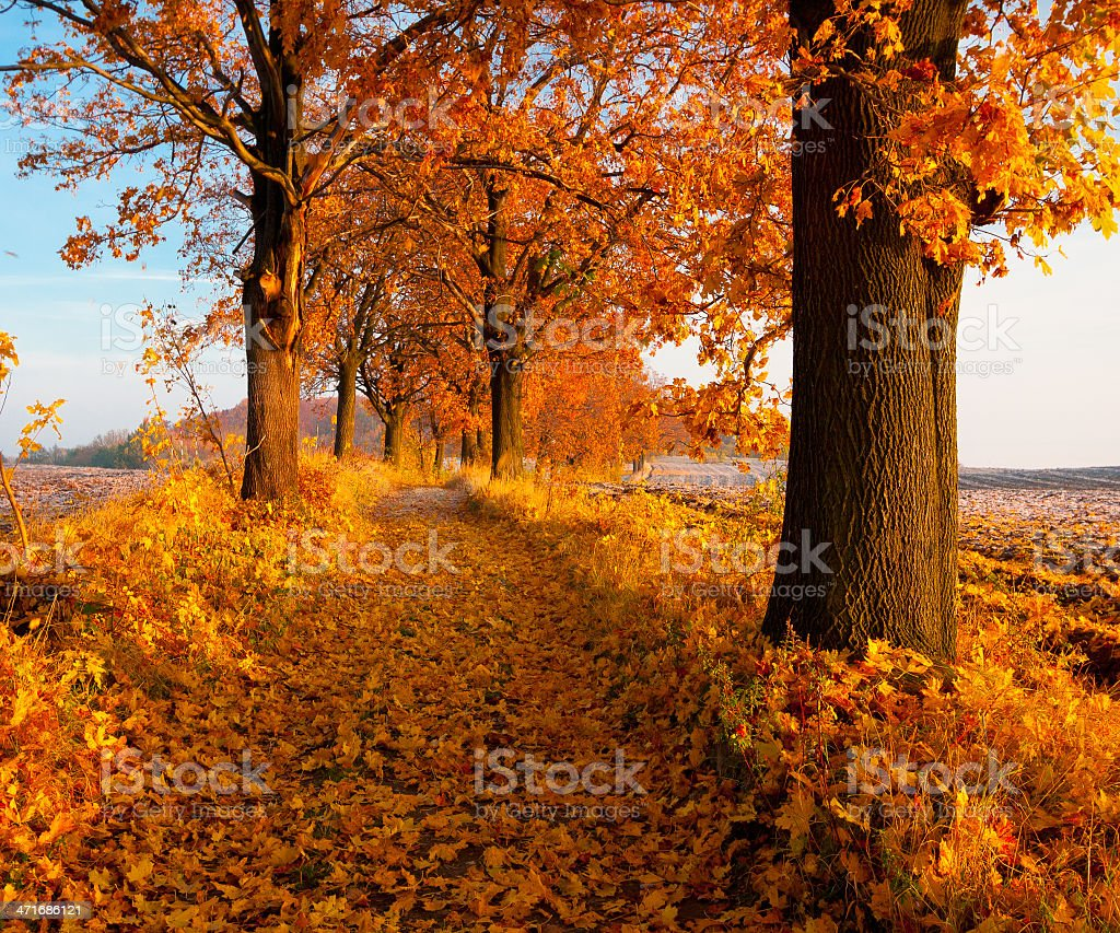 Autumn leaves in yellow and orange falling from trees royalty-free stock photo