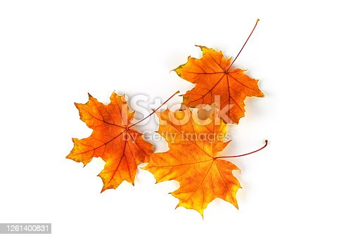 Autumn leaves isolated on white background. Top view