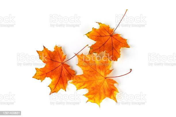 Photo of Autumn leaves isolated on white background. Top view