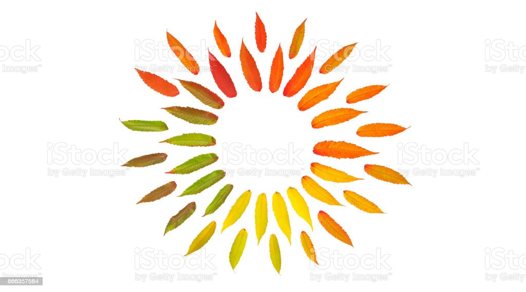 Autumn leaves isolated white background Flat lay pattern stock photo