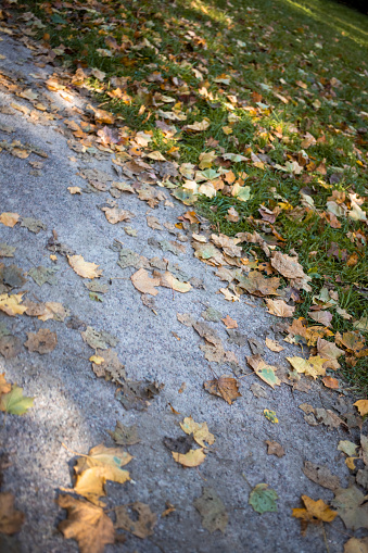 Background. Autumn leaves fallen on an old wooden bench in a park.