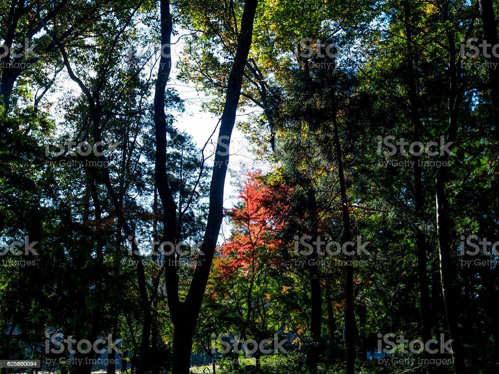 Autumn leaves looking into the forest ストックフォト