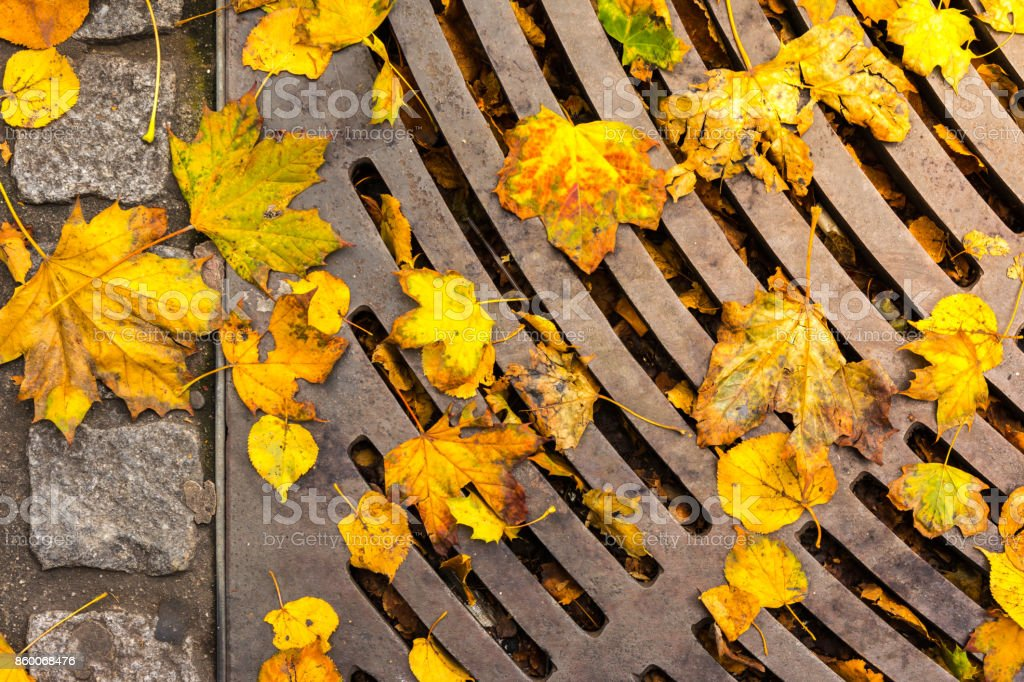 Autumn Leaves Lying on Asphalt Sidewalk Metal Sewage Aeration Cover Urban Street stock photo