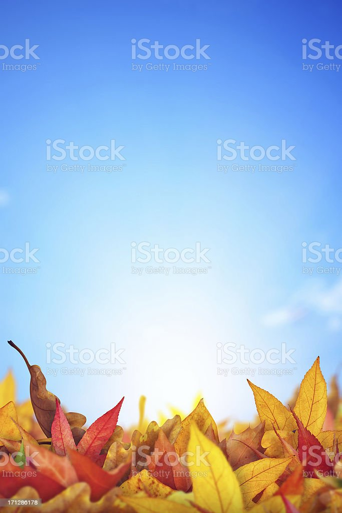 Autumn Leaves Lying On The Ground royalty-free stock photo