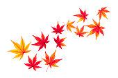 秋のもみじを葉します。