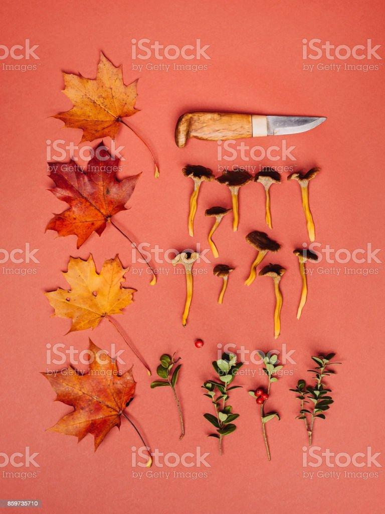 Autumn leaves mushrooms lingonberry nature background studio shot stock photo