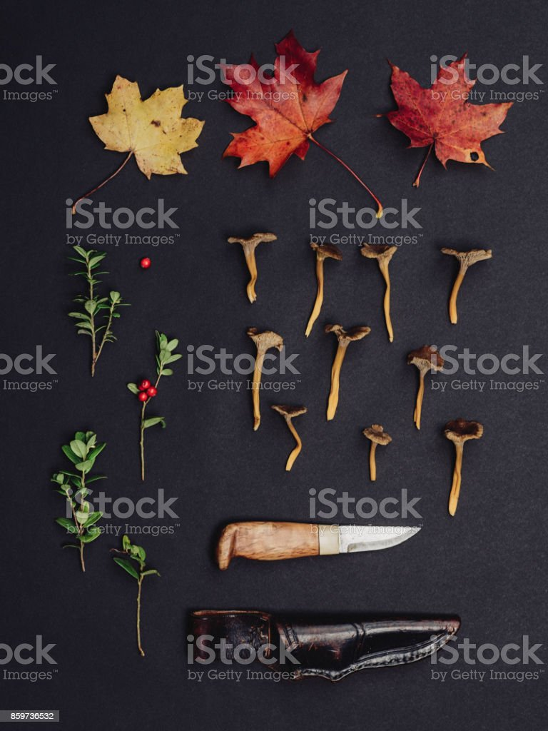 Autumn leaves mushrooms lingonberry nature background studio shot stock photo