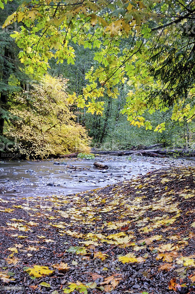 Autumn leaves next to small forest creek royalty-free stock photo