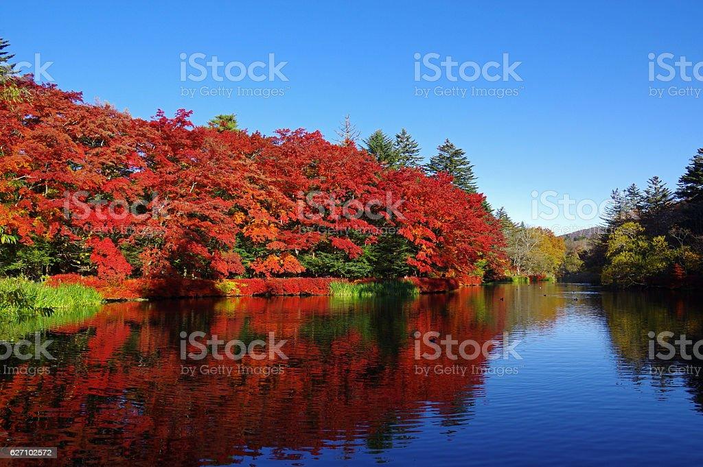 Autumn leaves of kumoba pond ストックフォト