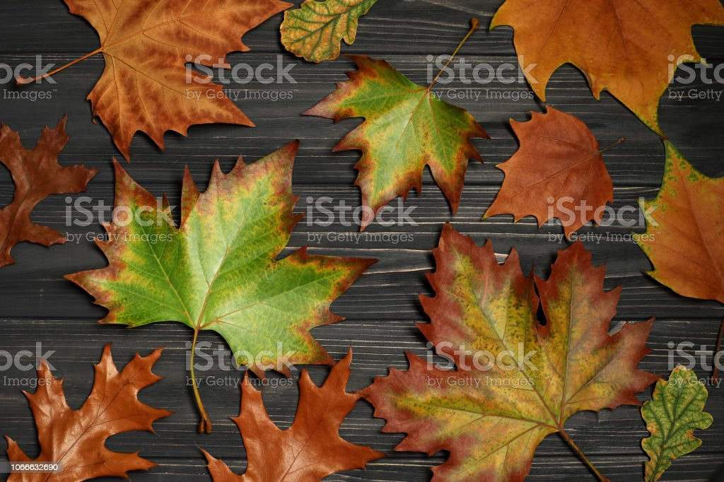 feuilles d'automne de l'érable sur fond en bois - Photo