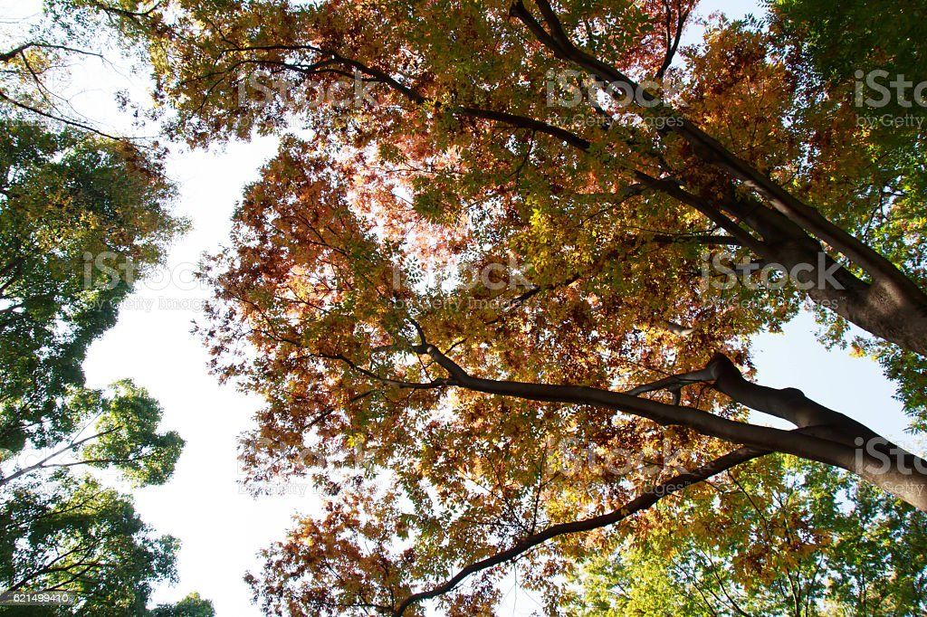 Autumn leaves of red leaves Lizenzfreies stock-foto