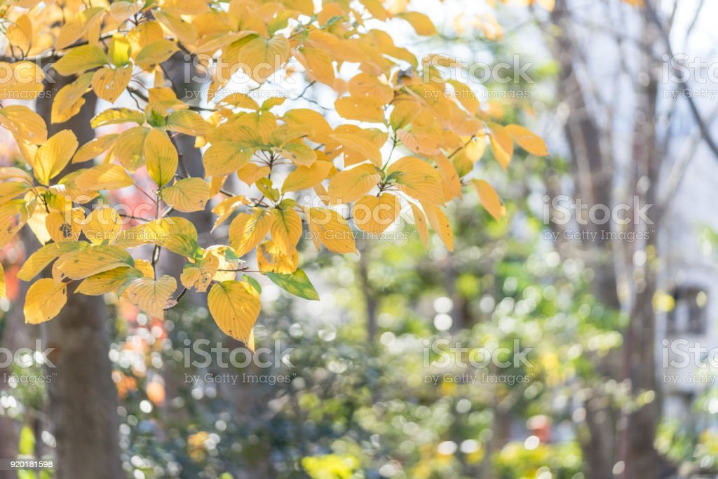 Autumn leaves of trees in park stock photo