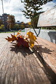 Autumn leaves on a bench