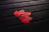 Autumn leaves on a black background. Wooden black background. Colors of autumn