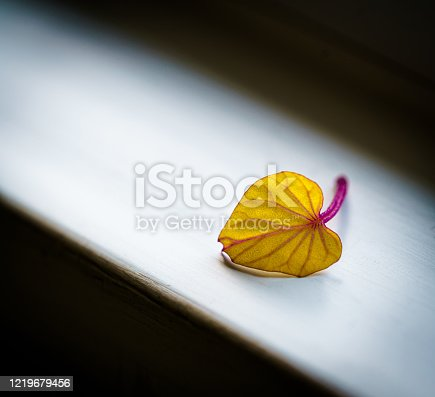 Autumn leaves on a misty window sill background