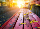 Autumn leaves on a park bench