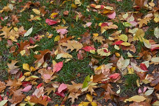 Autumn Leaves On A Path In The Forest - zdjęcia stockowe i więcej obrazów Bez ludzi