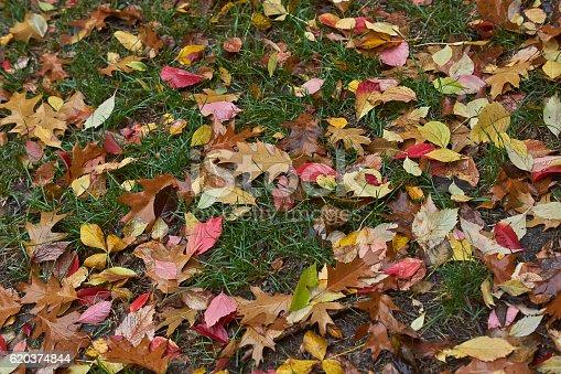 Autumn Leaves On A Path In The Forest - Stockowe zdjęcia i więcej obrazów Bez ludzi