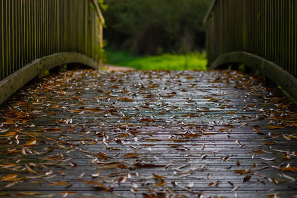 Autumn (Fall) leaves on a river bridge stock photo