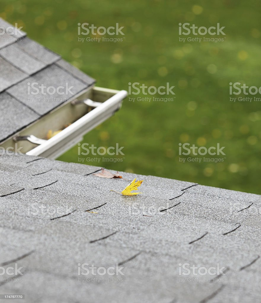 Autumn Leaves on a Wet Roof royalty-free stock photo