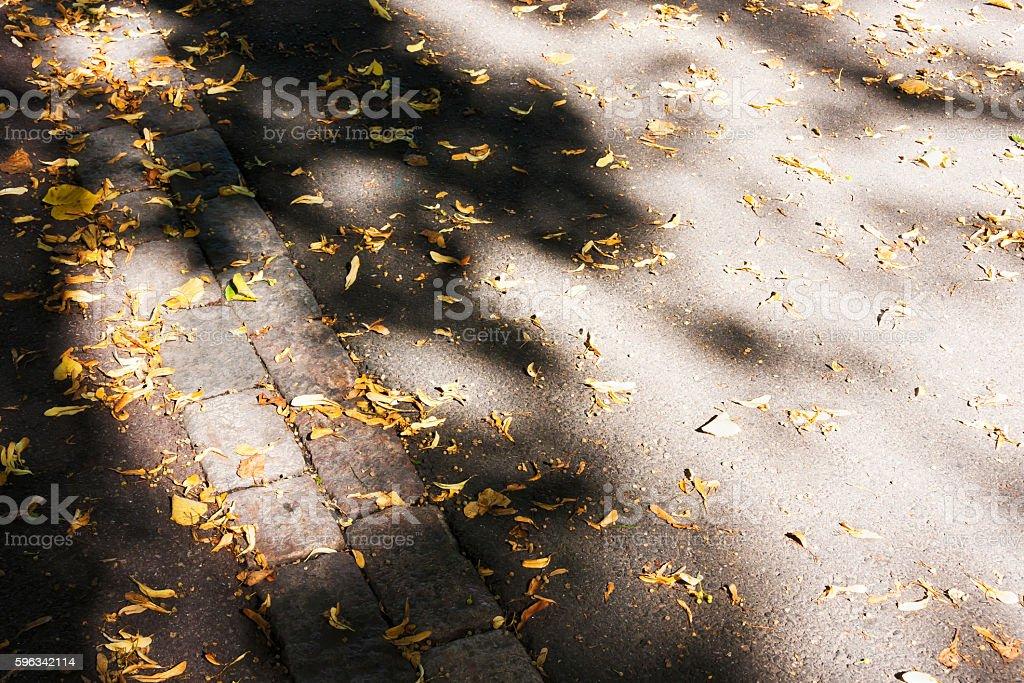 Herbst Blätter auf asphalt road Lizenzfreies stock-foto