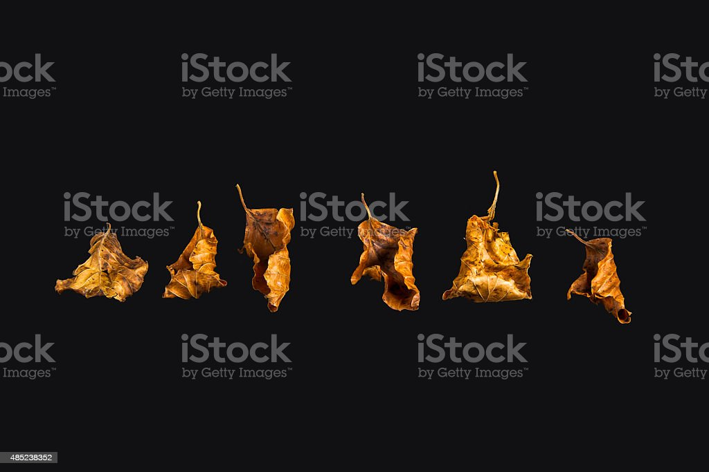 Autumn leaves on black background stock photo