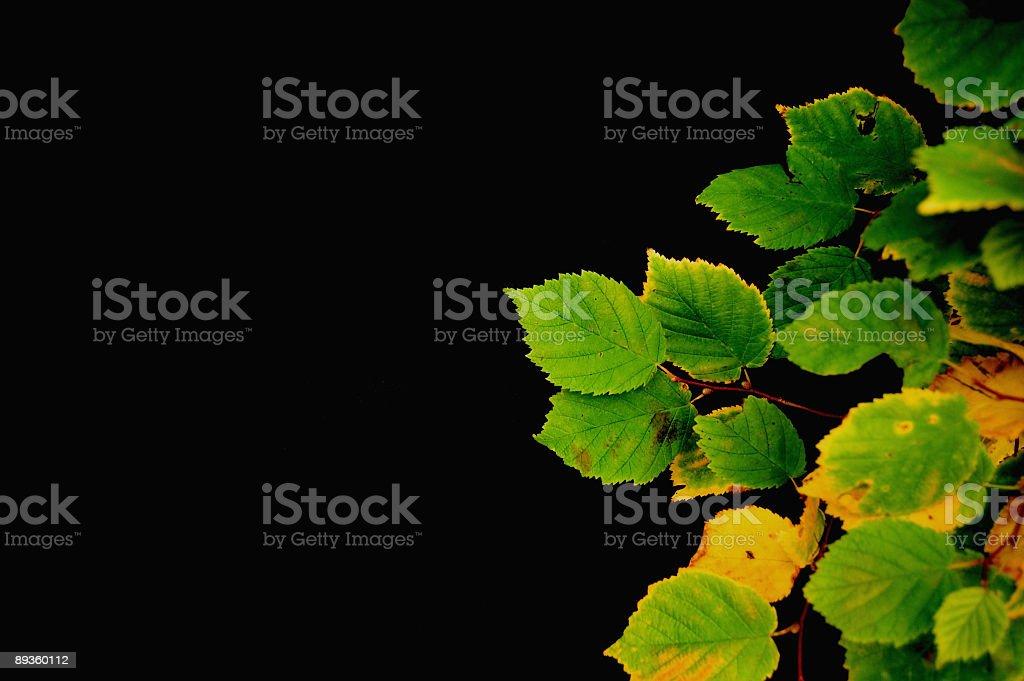 Autumn Leaves on Black royaltyfri bildbanksbilder