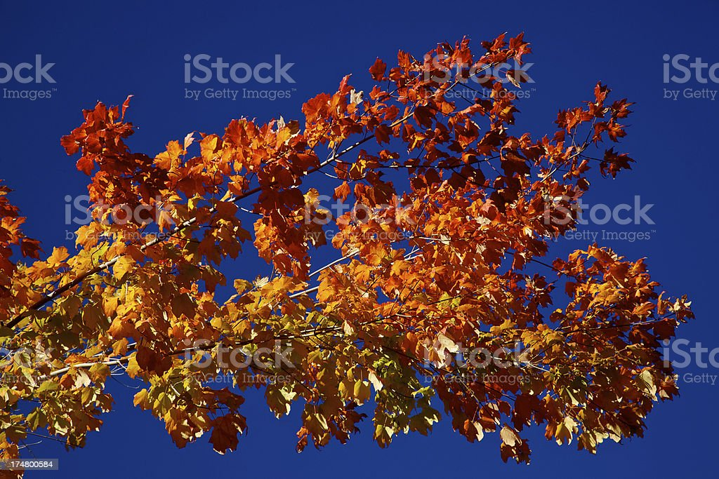 Autumn Leaves on Blue Sky royalty-free stock photo
