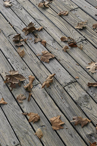autumn leaves on boardwalk stock photo