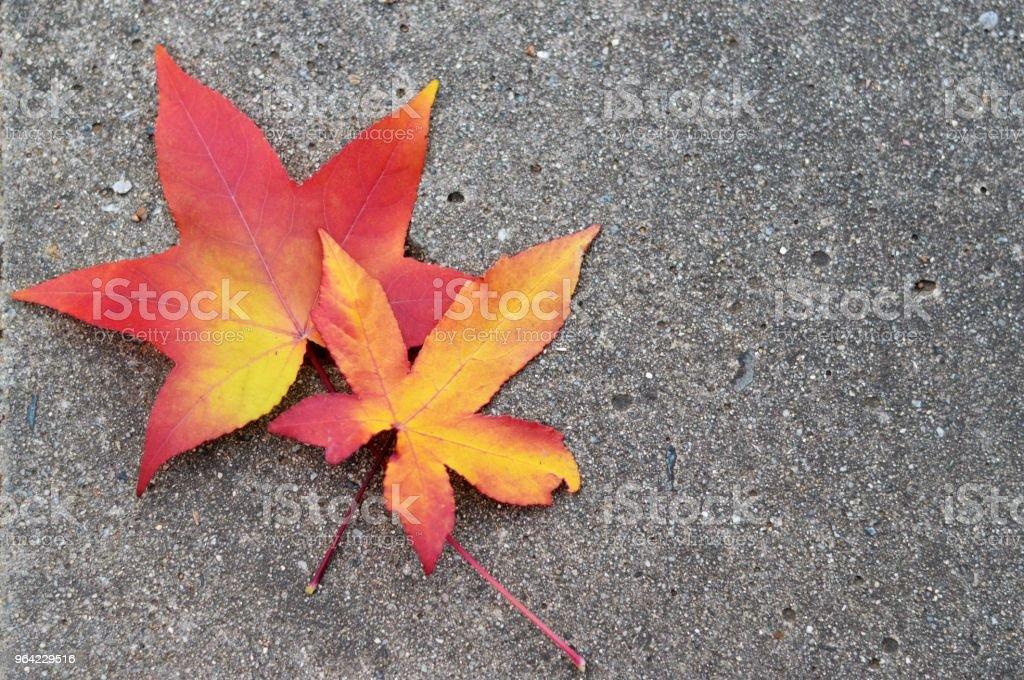 autumn leaves on concrete stock photo
