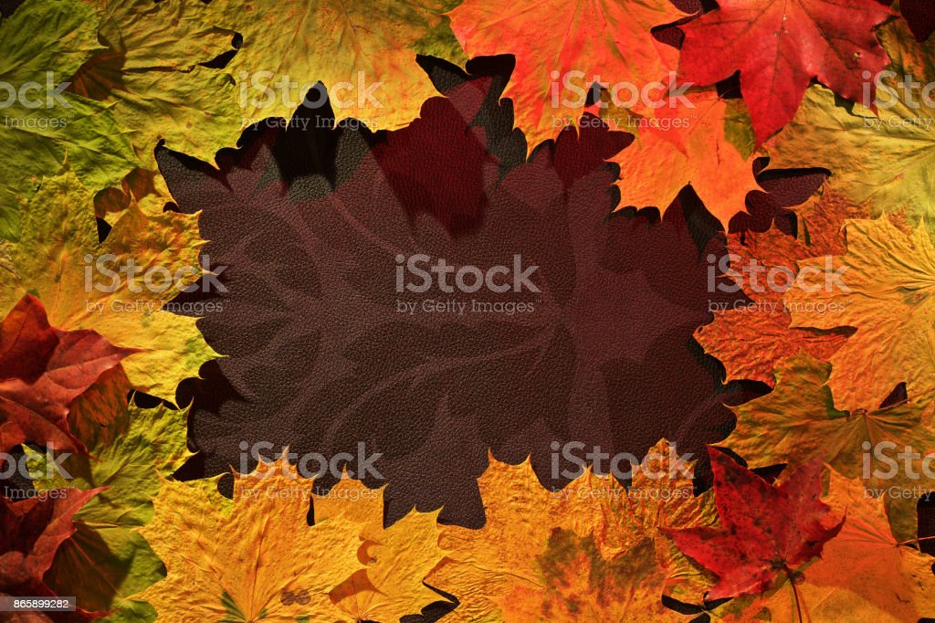 Autumn leaves on dark background stock photo