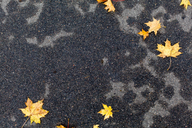 Autumn leaves on dark grey wet pavement background stock photo