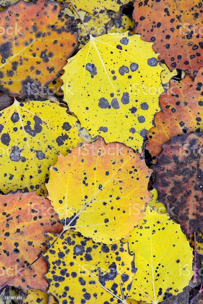 Autumn leaves on forest floor royalty-free stock photo