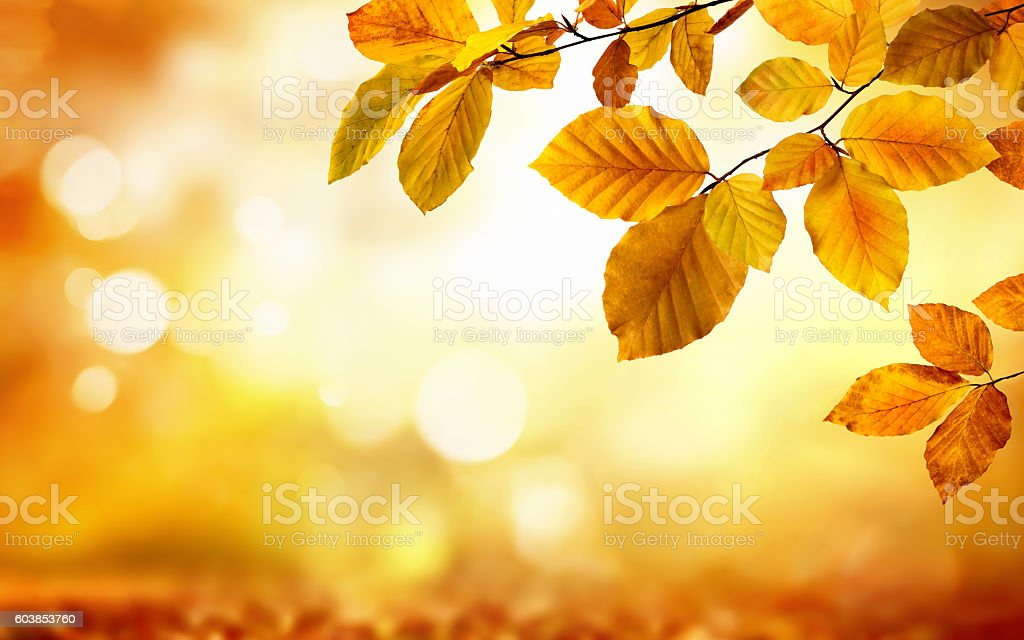 Autumn leaves on glowing blurry background stock photo