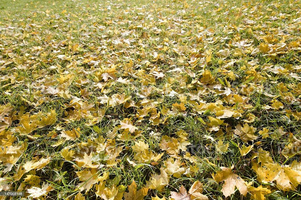 Herbst Blätter auf Gras Hintergrund – Foto