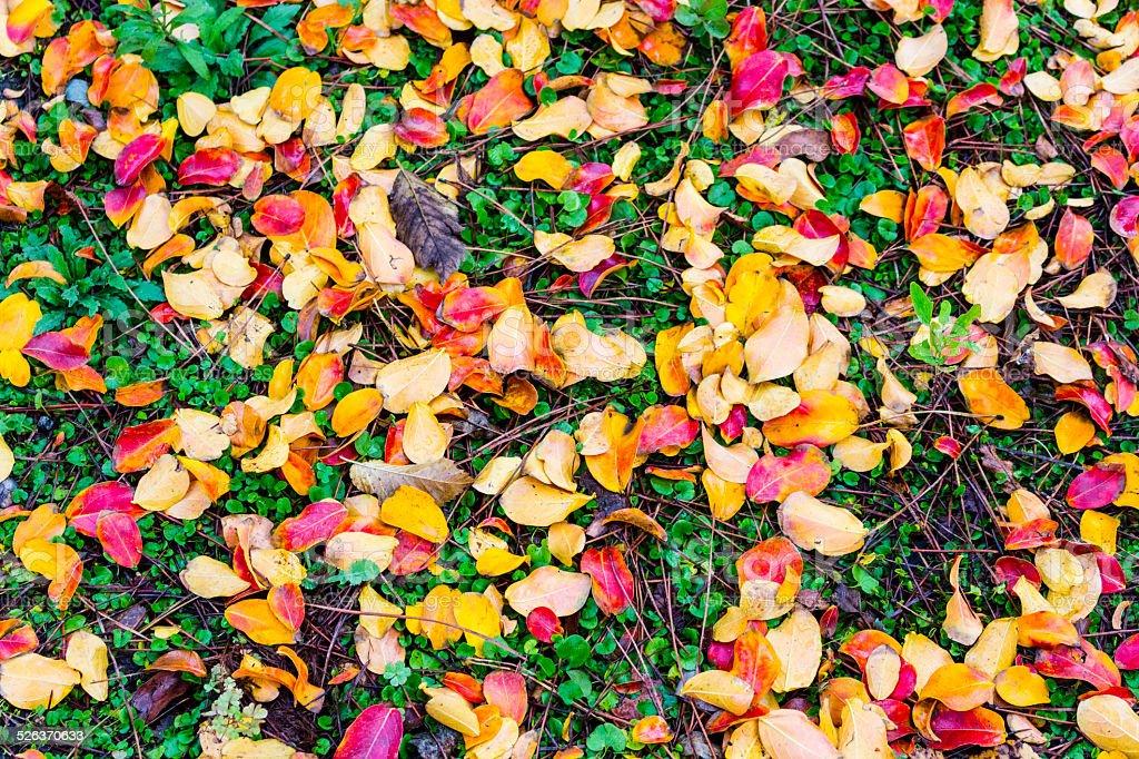 Autumn leaves on grass stock photo