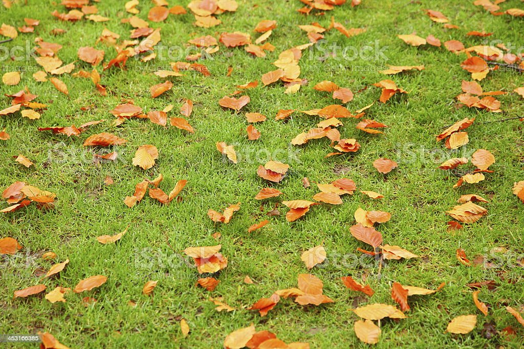 autumn leaves on green grass royalty-free stock photo