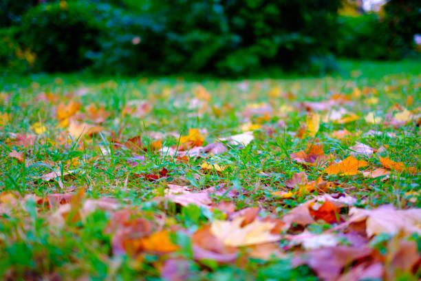 추절 잎은 녹색 잔디 스톡 사진
