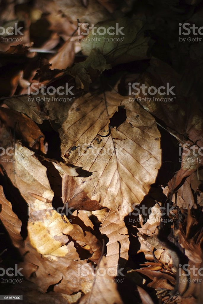 Autumn leaves on ground, macro royalty-free stock photo