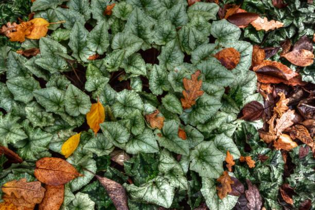 Autumn leaves on ground stock photo