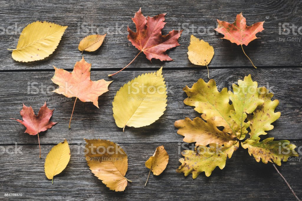Autumn leaves on old wooden backdrop royalty-free stock photo