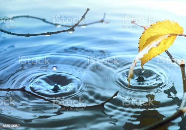 Photo of Autumn leaves on rippled water surface