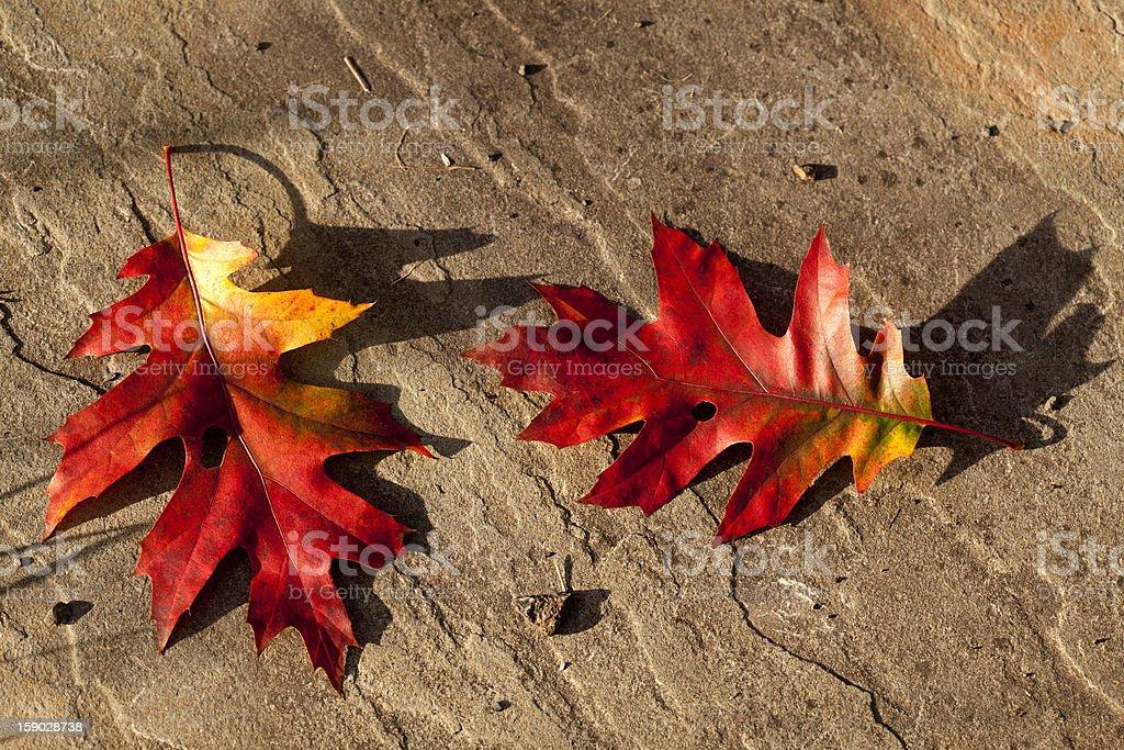 Autumn Leaves on Stone royalty-free stock photo