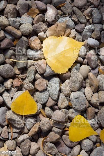 Photo of Autumn leaves on stone