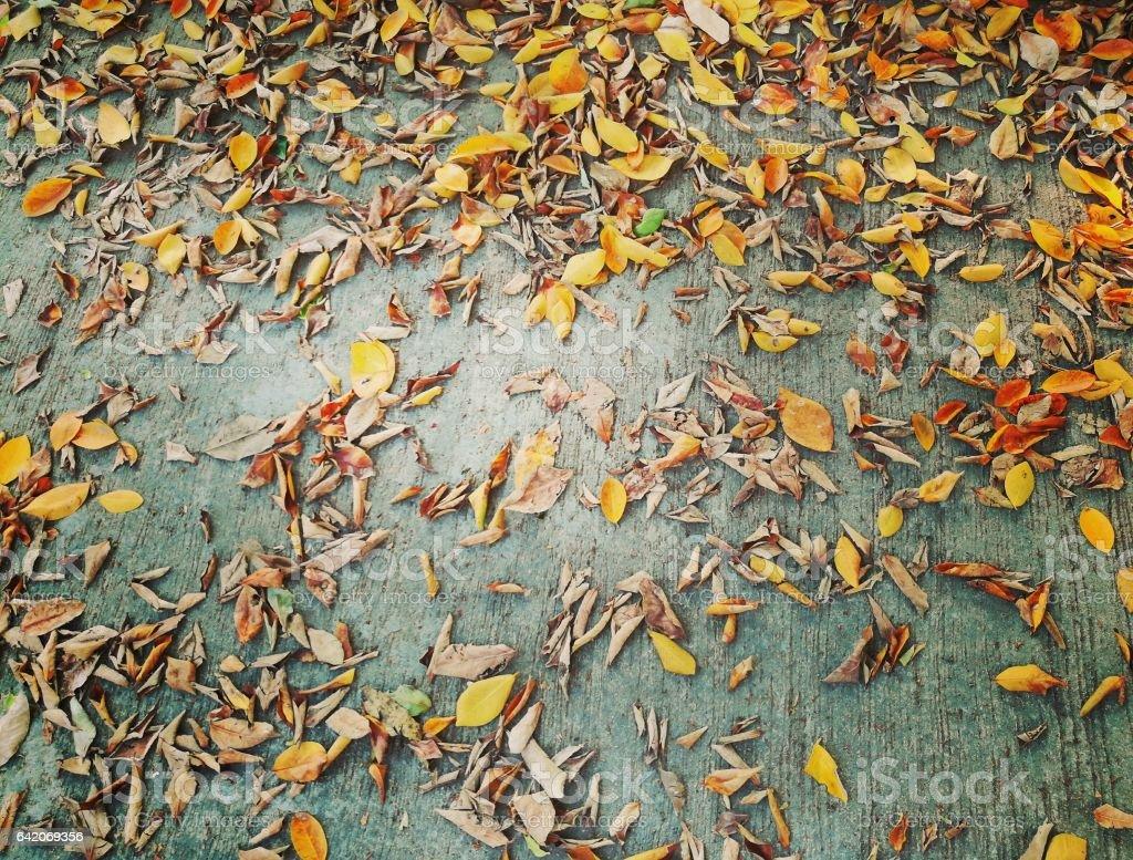 Autumn leaves on the concrete floor. stock photo