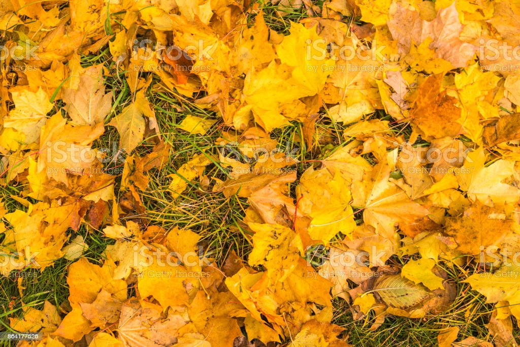 Autumn leaves on the grass royalty-free stock photo