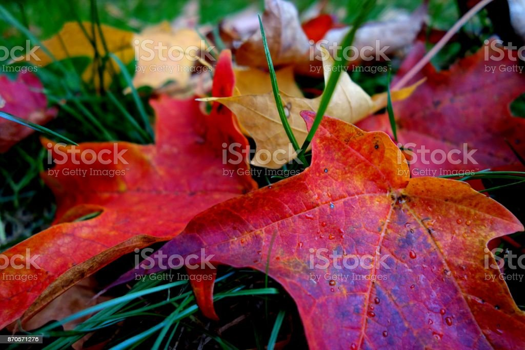 Autumn Leaves on the Grass stock photo