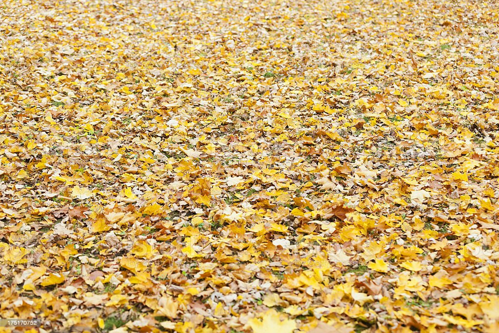 Autumn leaves on the ground in forest. royalty-free stock photo